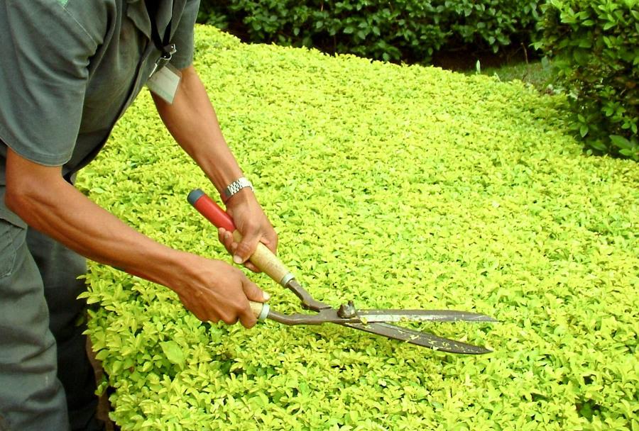Equipamentos de jardinagem