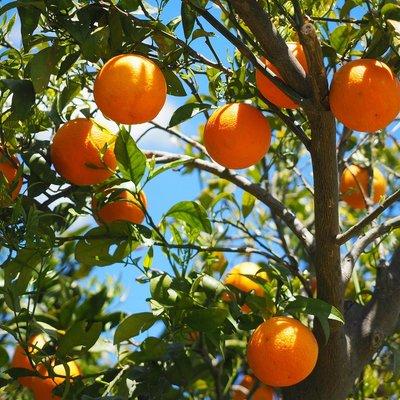 Árvores de frutos