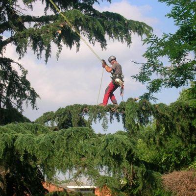 Poda de Árvores e Plantas