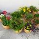 Floreiras e jardineiras