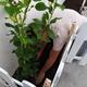 Manutenção de jardins e hortas