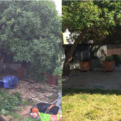 Recuperação de jardim