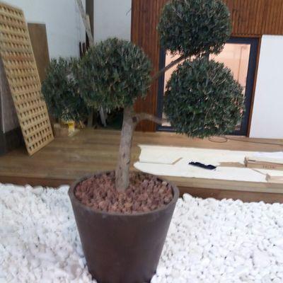 Jardim interior - exposição