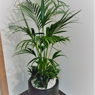 Decoração interior com plantas