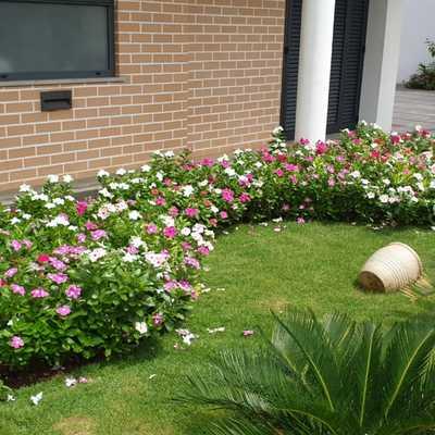 JARDIM - relvado, com plantas sazonais e cycas.