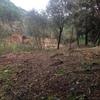Limpesas Florestais Desateros Abertura De Valas Aluguer De Máquinas E Camioes E Venda De Lenha