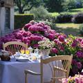 Decore o seu jardim com hortênsias