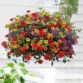 Verbenas, cheias de luz e cor