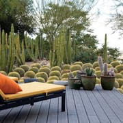 Jardim de cactos