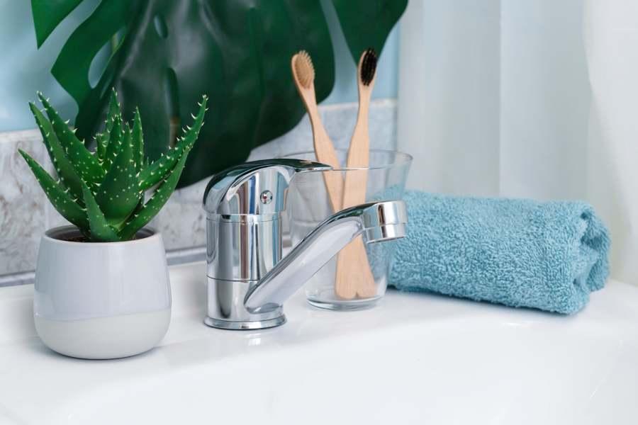 Aloe Vera na casa de banho