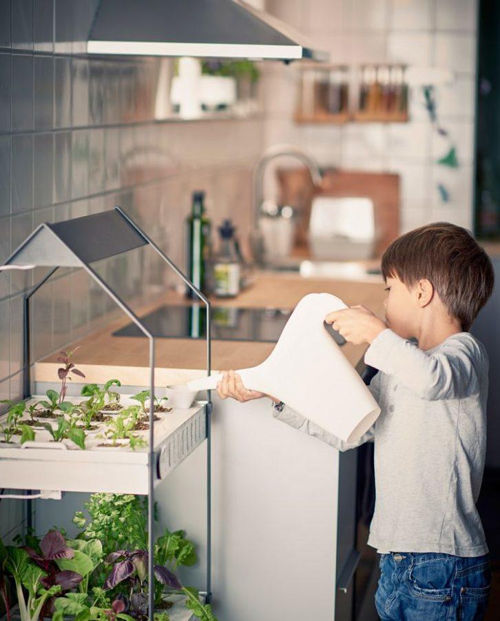 Criar a sua própria horta urbana