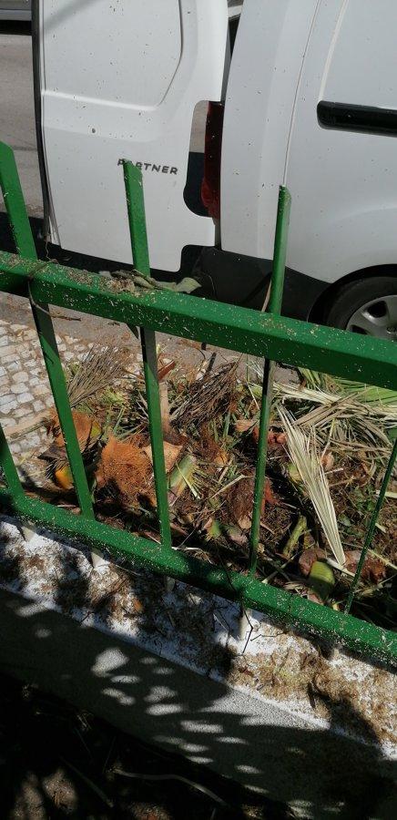 Limpezas dos destroços da palmeira