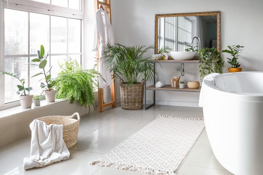 Samambaias na casa de banho