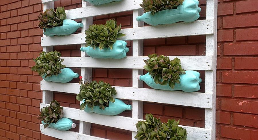 Suculentas, perfeitas para um jardim vertical