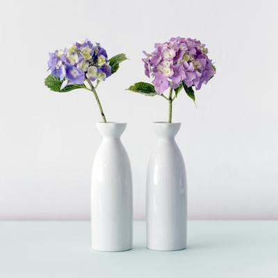 As plantas de exterior que estão na moda (e onde deixá-las!)