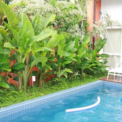 5 dicas simples para cuidar do seu jardim na primavera