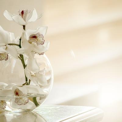 Que plantas devo colocar em casa, segundo o Feng Shui?