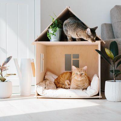 Como manter a casa limpa se tem Pets