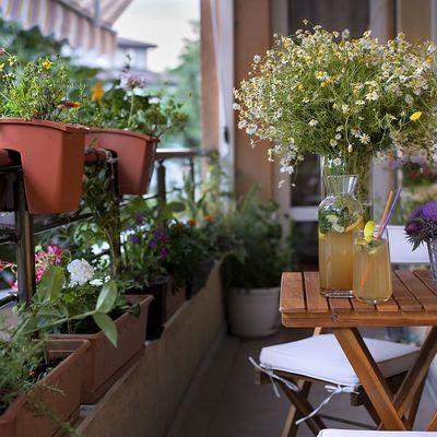 Como cuidar das suas plantas no verão