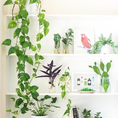As melhores plantas de interior para ter em casa