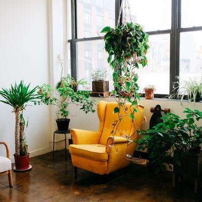 Ao estilo tropical: como decorar uma casa inspirada no Havaí