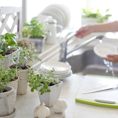 Horta de aromáticas em casa: plantas imprescindíveis e ideias