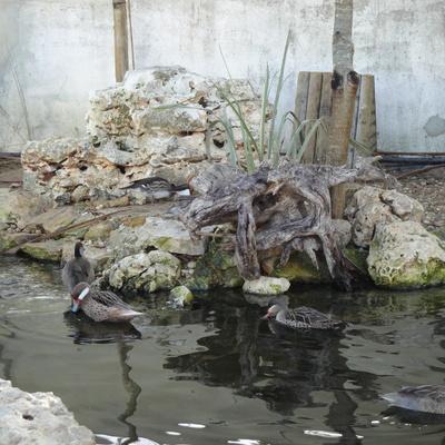 Projeto lagos e ambientes aquaticos
