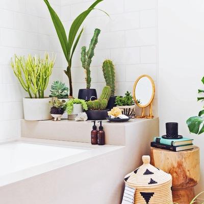 Encha de plantas a sua casa de banho