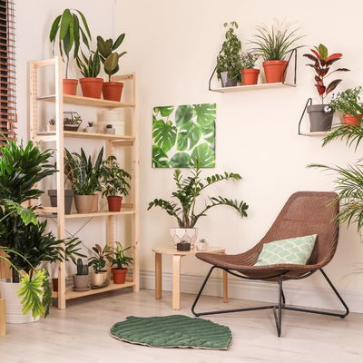 10 Dicas de como cuidar das plantas no inverno