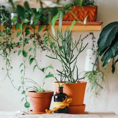 Quais os cuidados a ter com o seu jardim durante o tempo frio?
