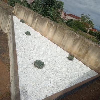 Jardim com baixa manutenção e reduzido consumo de água.