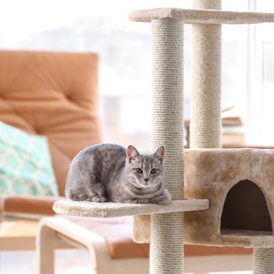 A sua casa está preparada para ter Pets?