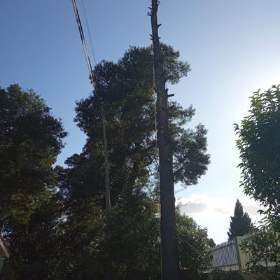 Abate de árvore em espaço confinado