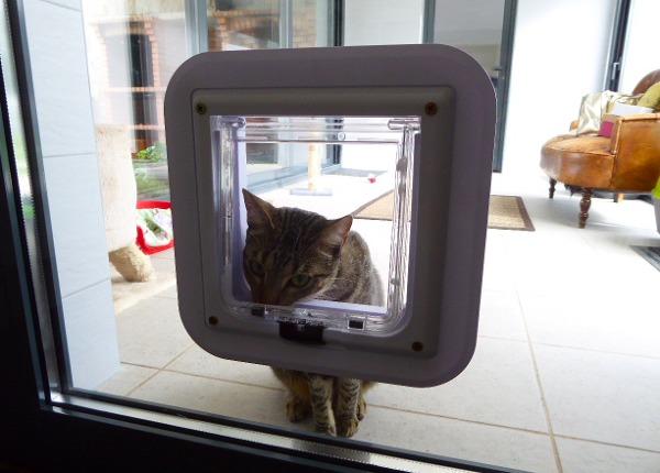 É possível colocar uma portinhola para entrada e saída de gato numa porta de vidro que dá para a varanda? Qual o valor?