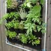 Outros Trabalhos De Jardinagem