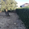 Limpeza do jardim e podas de arbustos e plantar algumas mudas