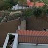 Plantação De árvore E Relva