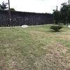 Plantação De árvore E Gramado