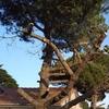 Poda Ou Remoção De árvore E Arbusto