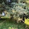Recuperação e manutenção de jardim (~700m^2)